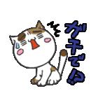 三毛ぬこ こめ&じぇすちゃ(個別スタンプ:13)