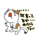 三毛ぬこ こめ&じぇすちゃ(個別スタンプ:17)