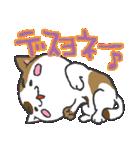 三毛ぬこ こめ&じぇすちゃ(個別スタンプ:27)