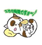 三毛ぬこ こめ&じぇすちゃ(個別スタンプ:30)