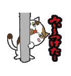 三毛ぬこ こめ&じぇすちゃ(個別スタンプ:36)