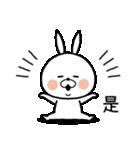 とにかくかわいい白うさぎの台湾旅行