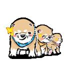 江戸っ仔犬 赤毛三兄弟(個別スタンプ:32)