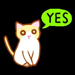 [LINEスタンプ] マカロン~元気な子猫ちゃん (1)