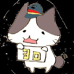 ぽっぽやキャット 猫美