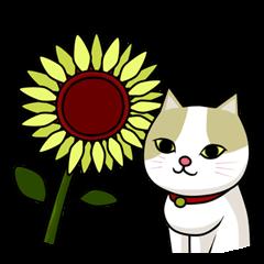 かわいい猫 ちろる3
