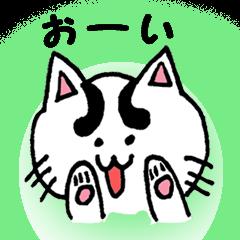 白ネコ 一家