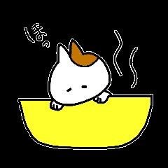 子猫の茶々丸1