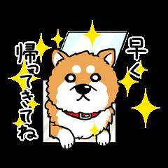 LOVE!!柴犬