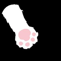ねこちゃんの肉球