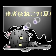 達者なねこ2(夏)
