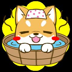 しばたん 3 柴犬 日本犬