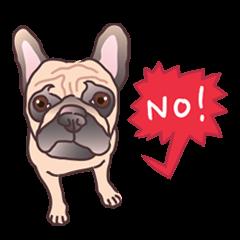 I am sissy (French Bulldog)