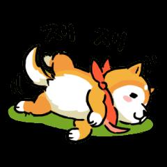 ほっこり柴犬