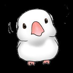 関西弁の手乗り文鳥