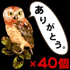 ありがとう40個  「一言フクロウ」vol.2