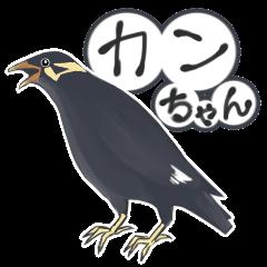 九官鳥のカンちゃん