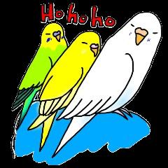 鳥バカ日記