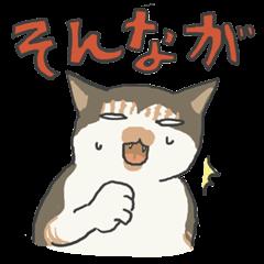 富山弁をちょいちょい話す猫たち