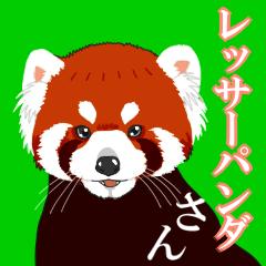 レッサーパンダさん