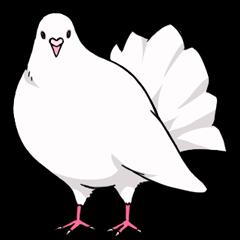 かわいい鳩2