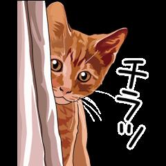 ネコ大好きスタンプ(リアル風)