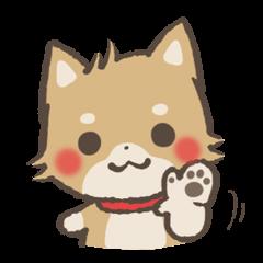 ゆるゆる柴犬 Vol.3
