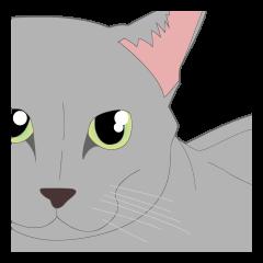 リアル系猫