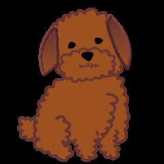 つっこみ犬 トイプードル