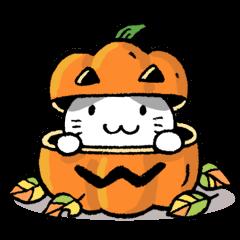 かぼちゃパンツの猫さん