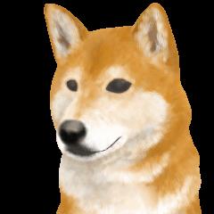 さすが!柴犬(敬語編)