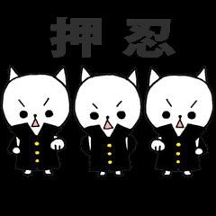 3匹の白ねこ