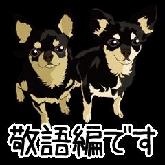 チワワのCOCOとLOUIS 敬語編