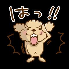 トイプーのぷう太郎 その5