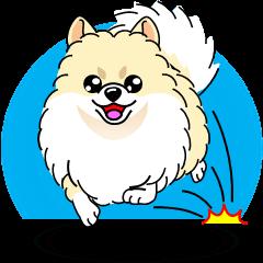 かわいいポメラニアン犬