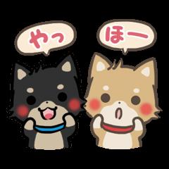 ゆるゆる柴犬 Vol.4【コンビ編】