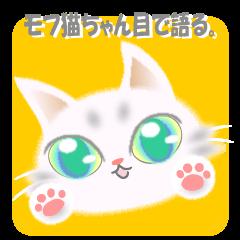 モフ猫ちゃん目で語る。
