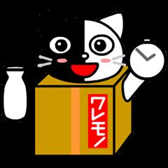 箱入り猫のモコ