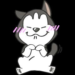 Pi Siberian Husky