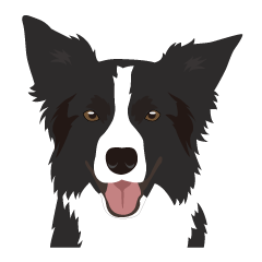 Cool border collies