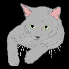 リアル系猫のご挨拶