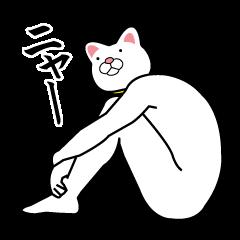 全身白タイツの猫