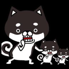 いぬ、イヌ、犬 その参 黒柴犬編