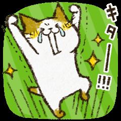 チャンパチとあそぼ【お誘いとゲーム編】