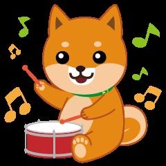 柴犬「ムサシ」5